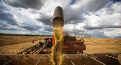 Atraso na colheita de soja reduz exportação do Brasil no início do ano