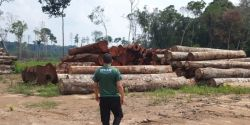 Madeireira irregular é multada em R$ 300 mil durante operação no Sul do AM